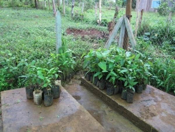 Photos 5-6 Local nurseries in Battambang and Mondulkiri province
