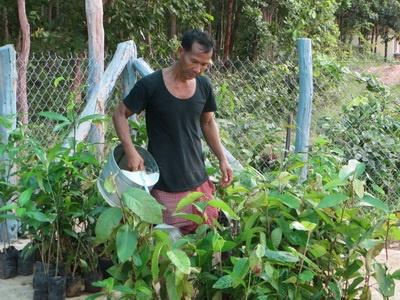 Photo 8 A villager take care trees in nursery