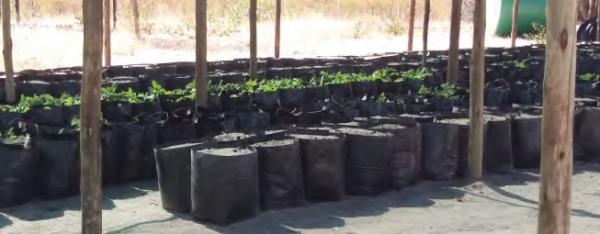 Micro-drip irrigation system at the Otshiku-tshiithilonde Emerging Community Forest nursery, COMDEKS Namibia