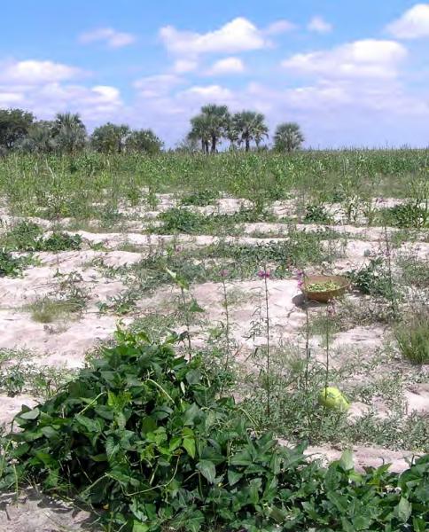 Rainfed pearl millet and vegetable field, COMDEKS Namibia