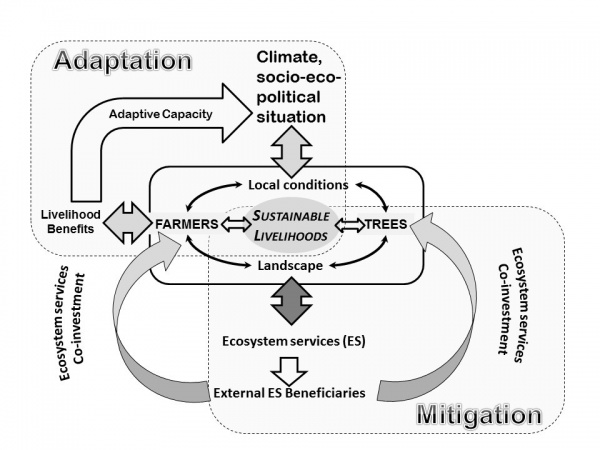 Figure 1. Link between adaptation and mitigation with farmers' resilience and ecosystem services