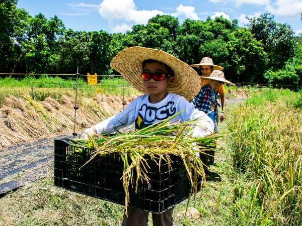 Rice planting education programmes are organized to engage young generation in rice production tradition