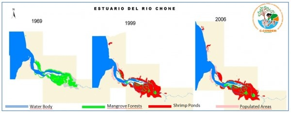 Figure 3. Destruction of mangrove forests in the Chone River Estuary (C-CONDEM 2007).