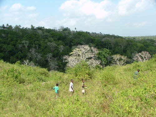 Figure 4. Degraded site within Kaya forest