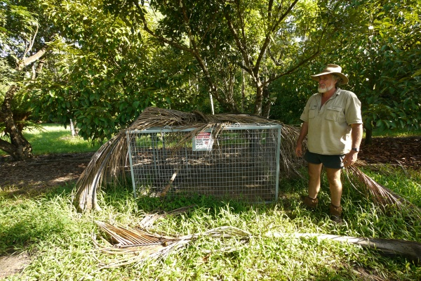 Picture 3.  A cage trap for capturing the wild boar Photo by Stefan Ottomanski (Nagao Natural Environment Foundation)