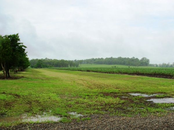 Picture 5. Wide drainage ditches in the field (Photo by JWRC)