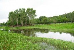 Picture 6.  Artificially made wetland (Photo by JWRC)