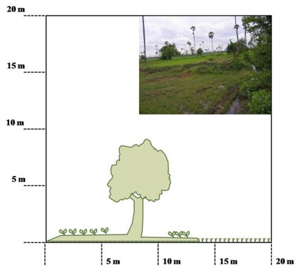 Figure 3 – Top and side views of small upland field in paddy field in Wat Chas village (Credit: UNU-IAS)