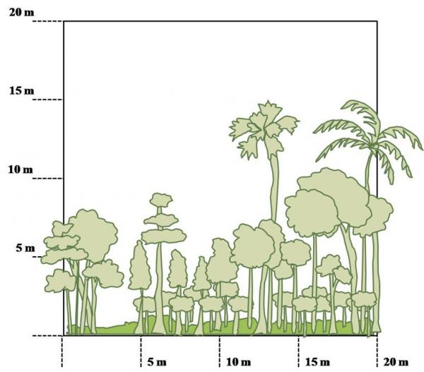 Figure 4 – Top and side views of multi-cropping field in Wat Chas village (Credit: UNU-IAS)