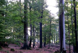 Photo 2. Beech and Oak Forest in Spessart (Photo by JWRC)