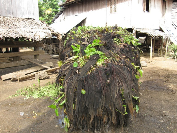 Picture 3 – Water hyacinth collected for composting by farmer in Wat Chas village (Credit: UNU-IAS)