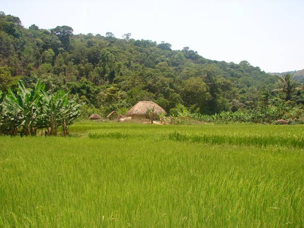 Picture 1. Traditional tribal dwelling (Photo by: A.V. Santhoshkumar)