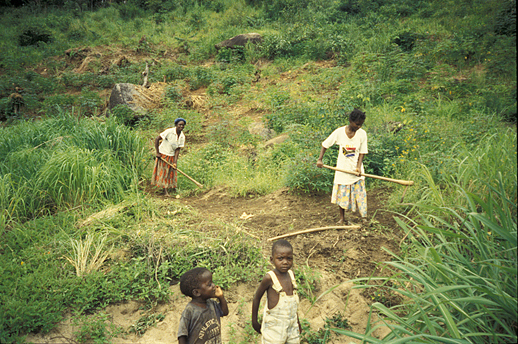 Fig. 5: Forming cassava (Manihot esculenta) mounds on a lakeside slope. Note the transition between laterite soil and sand. (Photographed by Setsuko Nakayama)