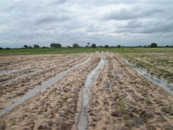 Photo 4: Conventionally ploughed field with water logging