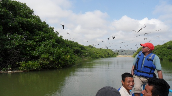 Community Tourism in the mangrove