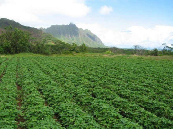 View of Waikane on the island of Oahu, balancing agriculture and natural resources