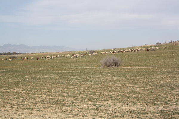 Figure 7: Mixed (cross-ethnic) grazing area in the Buffer Zone