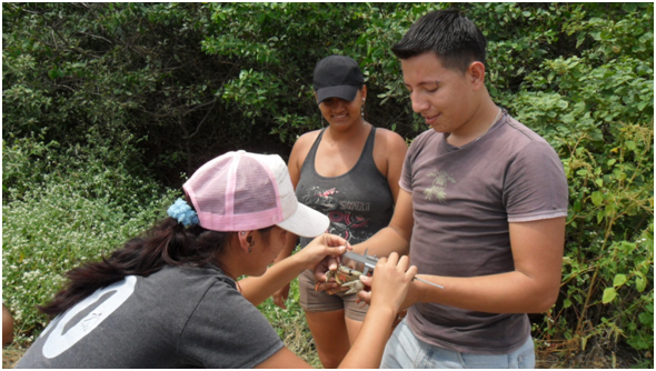 Photo 13: Measuring mouthless crab individuals trapped during monitoring.