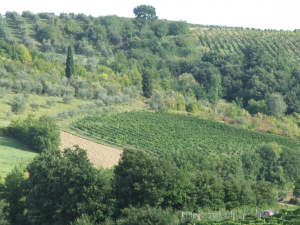 Figure 3. Vineyards, olive orchards, laboured land in author's farm, Montespertoli. Borders are shown with cypress trees (photo by Guido Gualandi)