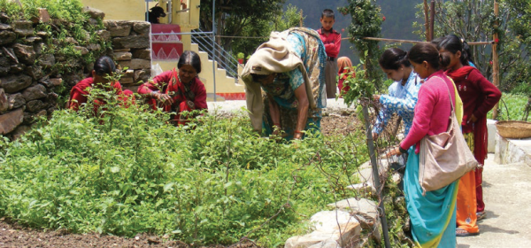 Home gardens enhance food security, nutrition and income, COMDEKS India