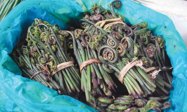 Vegetable fern is one of the provisioning ecosystem services provided by Barshong Gewog