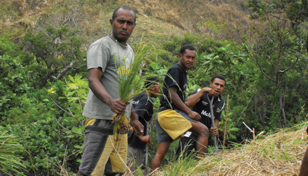 Communities plant vertiver grass to stabilize hillside soils, COMDEKS Fiji