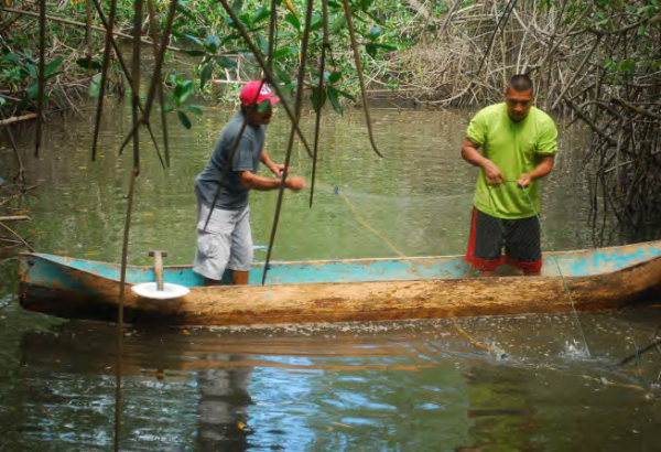 Fishing in mangrove forests, COMDEKS El Salvador
