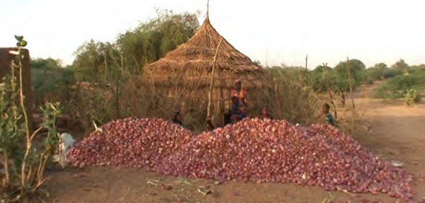 Irrigation for crops like onions uses water directly from the lake, COMDEKS Niger