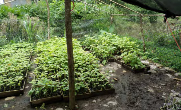 A community nursery provides seedlings for reforestation in the Napo River watershed, COMDEKS Ecuador