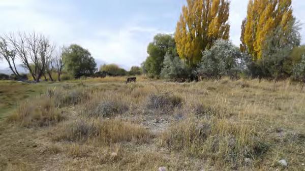 Degraded land threatens lakeside ecosystems near Balykchy Bay, COMDEKS Kyrgyzstan