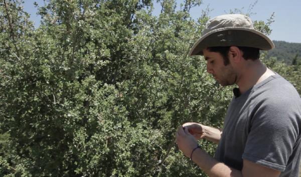Organically produced local almonds provide extra income, COMDEKS Turkey