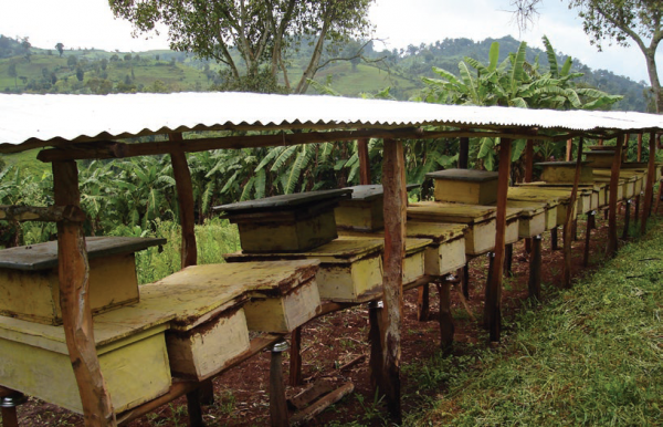 Some of the rehabilitated land in closure areas is used for honey production, COMDEKS Ethiopia