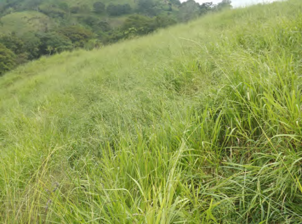 Community-improved pasture in Desmonte, Jesús María river basin, COMDEKS Costa Rica