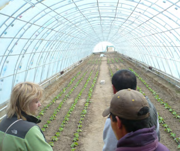 Community greenhouse at the site of a hot mineral spring in Kyzyl-Suu village, COMDEKS Kyrgyzstan