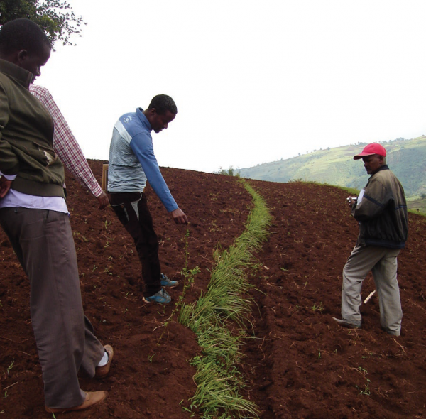 Reducing soil erosion, COMDEKS Ethiopia