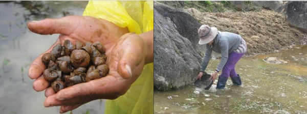 Figure 10. Crabs, fish, snails, shrimps and other small freshwater fish found in the stream (Photo: Le)