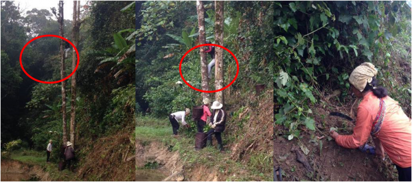 Figure 7. H're women searching for and collecting leaves and roots for the final bunch to present to Nature Spirits. The red circles highlight the villagers climbing trees (Photo: Dang)
