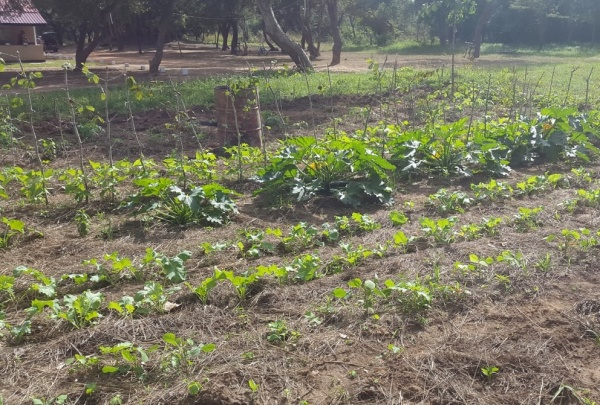 Natural Agriculture training farm adjacent to the lodge
