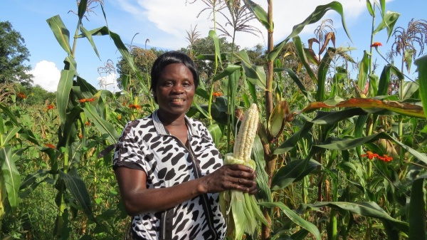 Zambian farmer with Go By Red Maize