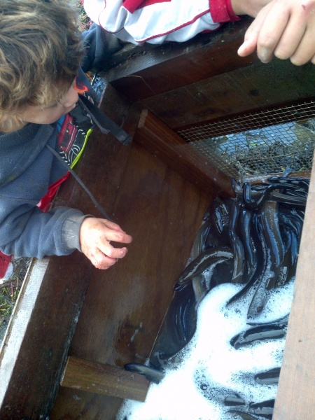 Figure 1: traditional eel storage (Photo by Cilla Brown)
