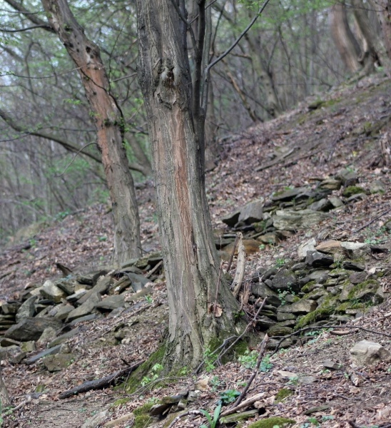 Figure 2. Old terraces in the forest hills of Arndsorf (04.04.2016). © Kieninger