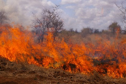 Photo 2: Perennial bush burning of a portion of the sacred forest Photo credit: Muni Pomadze Ramsar Site, 2012