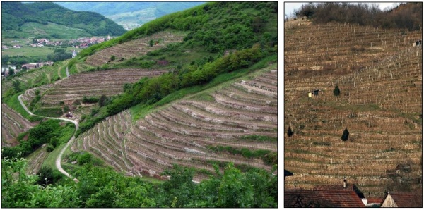 Figure 6 and 7. Vineyards in Loiben (20.05.2010) and Spitz (09.02.2016). © Kieninger.