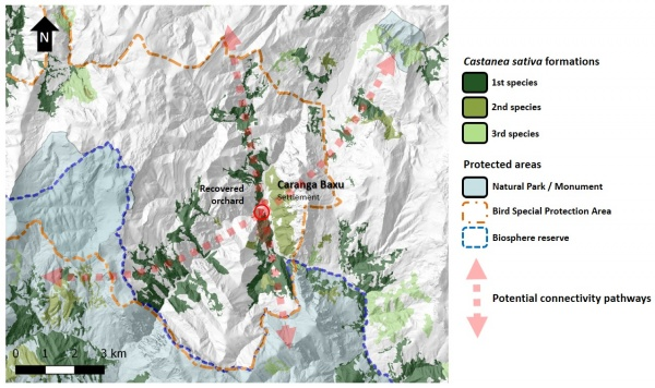 Figure 12. Relative position of the recovered orchard in Caranga Baxu (red circle) with respect to protected areas (Natural Parks and Monuments, Bird Special Protection Areas, or Biosphere Reserves). Chestnut forest typologies show where the species is dominant (first), or is the second or third species in abundance. Potential connectivity pathways show the possible function of recovered orchards as ecological linkages.