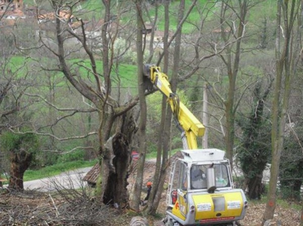 Figure 5. Use of mechanical means to remove felled trees (Source: GIS-Forest 2012).
