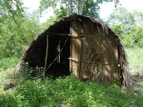 Figure 8. Sacred hut within Kaya forest used by Kaya elders for traditional prayers and rites and rituals
